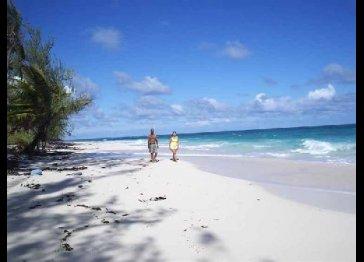 Tropical Dreams Rentals, Apartment, Suites, Efficiencies .