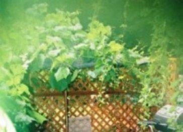 The Vines Garden Suite