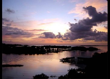 A Birdwatcher's Delight - Tranquility in Cedar Key